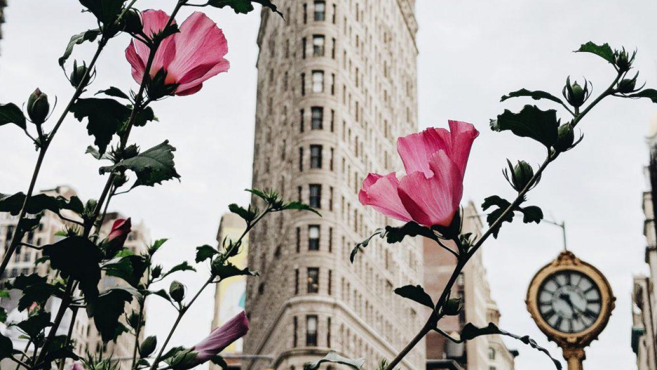 New York City-Based Beauty Companies | ForceBrands Newsroom