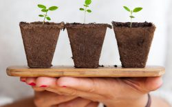 Cannabis Job Growth