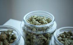 cannabis in jars